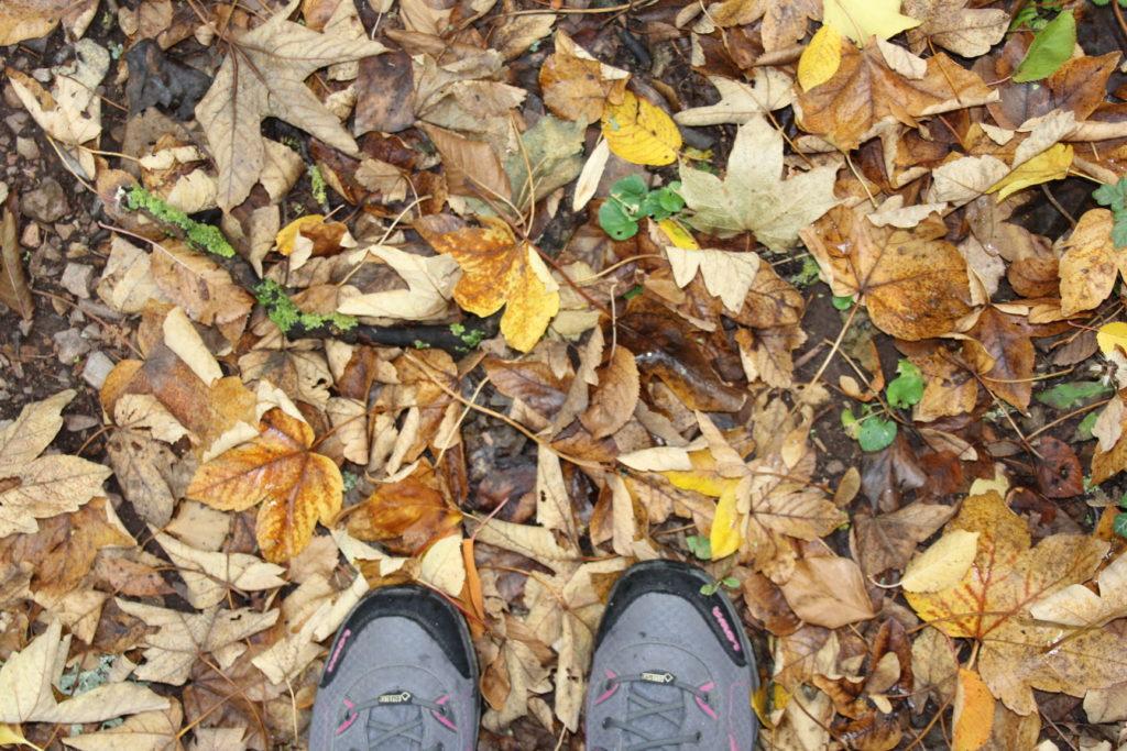 Herbst Greifenberg Limburg