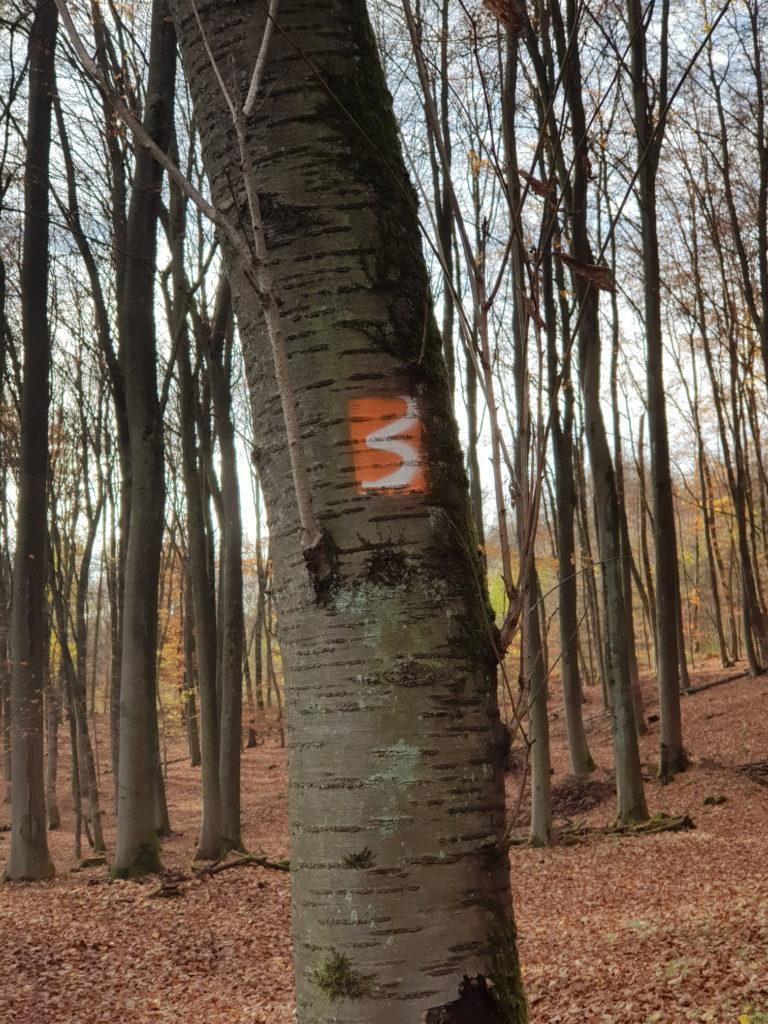 Blasiussteig Blasiusberg Wanderweg
